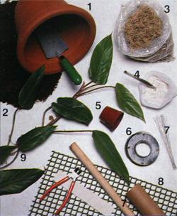 Комнатные растения фото и название