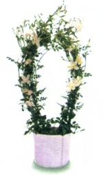 Растения фото фотка фотография