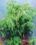 Фотографий комнатные растения